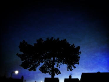 Photo of tree at dawn